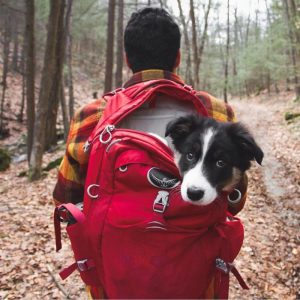 camping-with-dog-ryan-carter-98__700